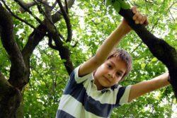 Ein Junge klettert auf einem Baum herum. Was Eltern Sinnvolles gegen die Computersucht ihrer Kinder tun können. www.gesundheitsjournalistin.ch